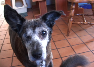 Lily Does Derrida: A Dog's Video Essay, 2010-12 Video still, duration: 29:30 min.