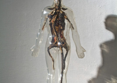 Skin Deep, 2009 Taxadermied rat, Visible Man educational toy, steel, linoleum, plastic, acrylic paint, sealants, mixed media, 17 x 7 x 9.5 in.